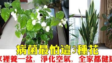 「病菌」最討厭的3種花, 家裡養1盆, 清香又乾淨, 一家老小都健康