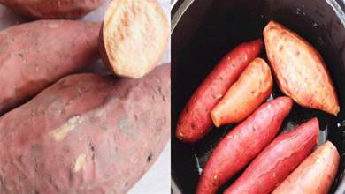 保存紅薯不用放地窖,教您老農的幾個土方法,紅薯數月不發芽