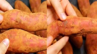 買紅薯要選公的,菜農:學會4個技巧,看一眼就能辨出來,太實用