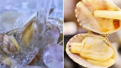 洗花蛤,別只懂撒鹽,學會老漁民這一招,3分鐘搞定,無一點泥沙