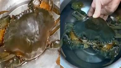 保存螃蟹時,是該蒸熟還是煮熟?多數人都錯了,老漁民教正確方法