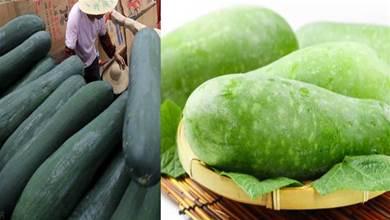 買冬瓜時,挑黑皮的還是白皮的?老菜農:這3種冬瓜別買,很難吃