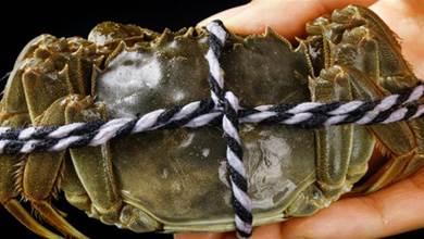 保存螃蟹,最忌直接放冰箱,牢記5個訣竅,螃蟹放1周還新鮮