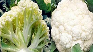 買花菜,到底是買散花還是緊花?菜農:口感差別大,記得別選錯了