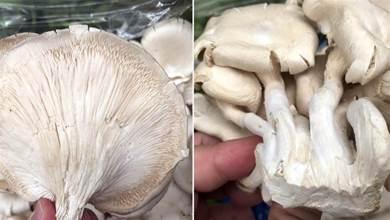 買平菇時,選大的還是小的?菜農教你一招,輕鬆挑出好平菇