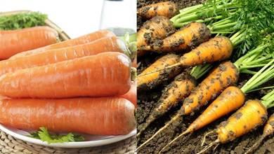 買胡蘿蔔,帶泥和乾淨的選誰?菜販:很多人買這種,但我從來不吃