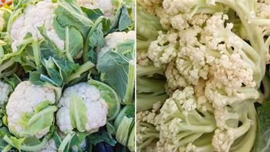 花椰菜有散花和緊花,買哪一種才好,菜農告訴你如何挑選,保證不會買錯