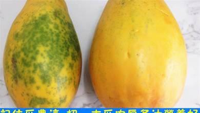 買木瓜,最好挑「雌木瓜」,記住瓜農這3招,木瓜肉厚多汁營養好