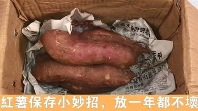 教你1招,紅薯這樣儲存,越放越甜,即便放半年不腐爛不發芽