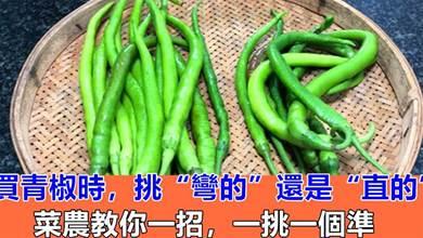 """買青椒時,挑「彎的""""還是""""直的""""?菜農教你一招,一挑一個准"""