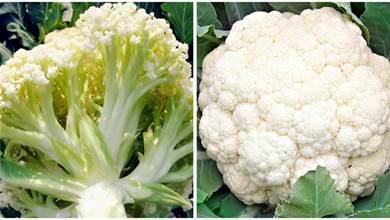 花椰菜,有緊實的也有鬆散的,買哪個更好更營養,菜農告訴你答案,以後別在買錯了