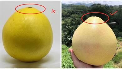 買柚子時記住這5點,挑選的柚子皮薄肉多汁又甜,一挑一個准