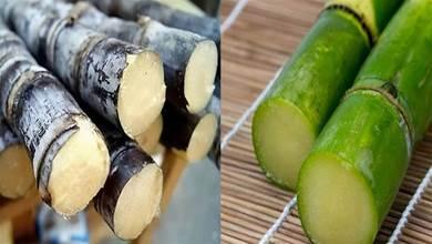 買甘蔗時,應該挑選紫皮還是綠皮?果農告訴你實情,別再買錯了