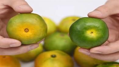 橘子也分「公母」,果農教你1招,一挑一個准,橘子好吃又香甜