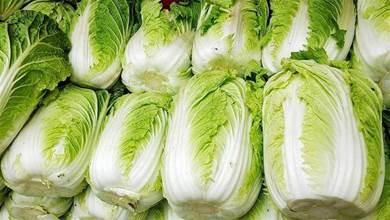 保存白菜,放地上放冰箱都不對,教你2個土方法,放上半年都新鮮