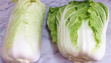 買大白菜,選白色的還是綠色的?老菜農教您3招,以後就不會買錯