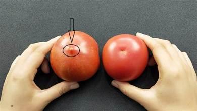 買番茄要挑選「母」的,頂部看一眼就能辨出,沙甜又多汁