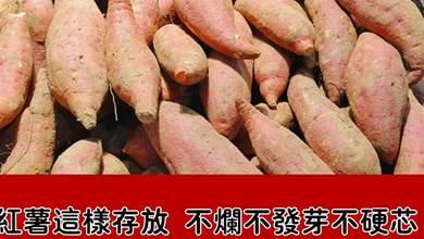 才知道,保存紅薯這麼簡單,便宜買多放半年不爛不發芽,省不少錢