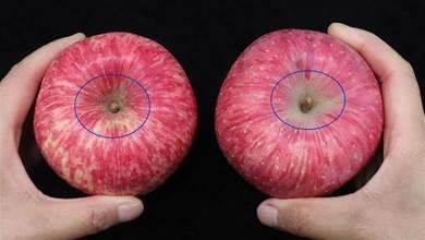 挑選蘋果有訣竅,牢記1個「小機關」,甜不甜一眼看出,方法真棒