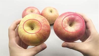 同樣是蘋果,選大的還是小的?果農教您一招,以後別亂買了