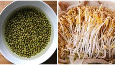 在家自發綠豆芽,不用土壤不用肥料,3天就能吃,營養脆嫩又衛生