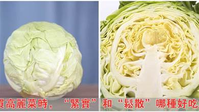 買高麗菜時,「緊實」和「鬆散」哪種好吃?口感差很多,別再買錯了