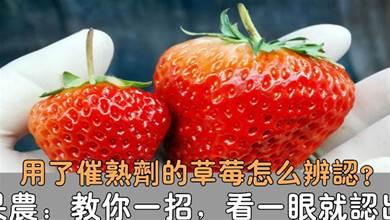 愛吃草莓的要留意了,我也是今天剛瞭解的,抓緊告訴身邊的人