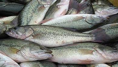 處理過的魚不要直接放冰箱,教你正確的保存方法,隨吃隨取真方便