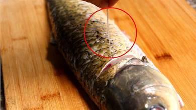 摘除「魚腥線」大錯特錯!這4處才是魚腥味源頭,看一看怎麼處理