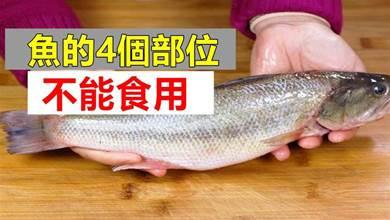 魚身4個地方毒素最多,不要隨便吃,多虧賣魚老闆告知,長記性了