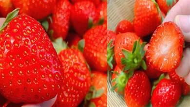 你家還在買激素草莓嗎?老果農教你看3個地方,可惜知道的人太少