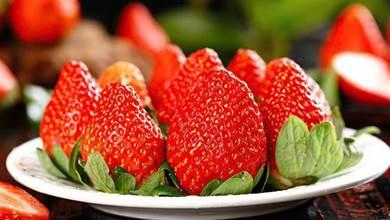 打了「激素」的草莓怎樣辨認?老果農:教你一招,一眼就能看出來