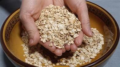 84歲鐘南山每天都吃的燕麥早餐,不蒸不煮粥,我家隔天做一鍋,香