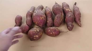 蒸紅薯時,切記不可直接上鍋蒸,多加一步,保證比烤紅薯還香甜好吃