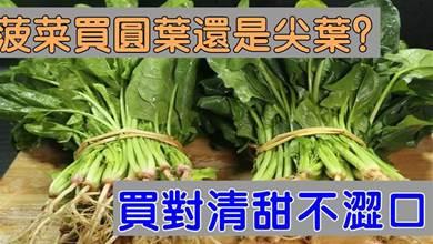買菠菜時,「圓葉」和「尖葉」要分清,差別很大,買錯澀口不甜爽
