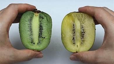 獼猴桃別傻傻買錯了!綠色和黃色的獼猴桃,到底哪一個比較好?學起來