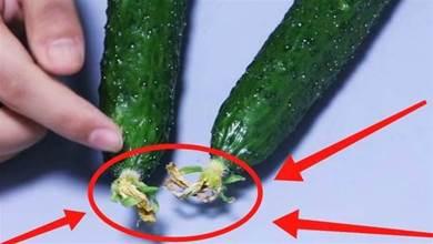 黃瓜有沒有打激素,這裡一看便知,菜販子不慎說漏嘴,別再買錯了