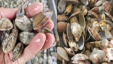 洗花蛤時,萬萬不可加鹽吐沙!漁民:牢記一個土方法,花蛤快速吐沙