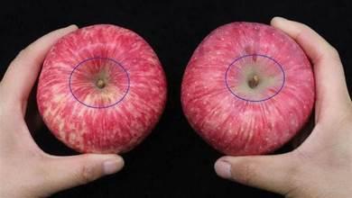 蘋果也分「公母」,記這4個訣竅,一買一個准,再不會買到酸蘋果