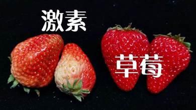 遠離「激素」草莓,5步辨別要記牢,看完記得告知您的家人和朋友