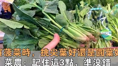 買菠菜時,要分清「圓葉」和「尖葉」,區別挺大,買錯澀口又難吃