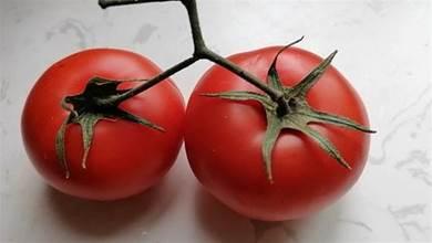 買番茄時,要分清「5葉」和「6葉」,區別挺大,弄懂再買不浪費錢