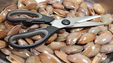洗花蛤時,牢記別直接加鹽!老漁民教我一招,花蛤自動瘋狂吐沙