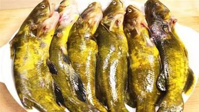 大廚:不管燉什麼魚,都不可放這「3種調料」,做錯魚又腥不鮮美